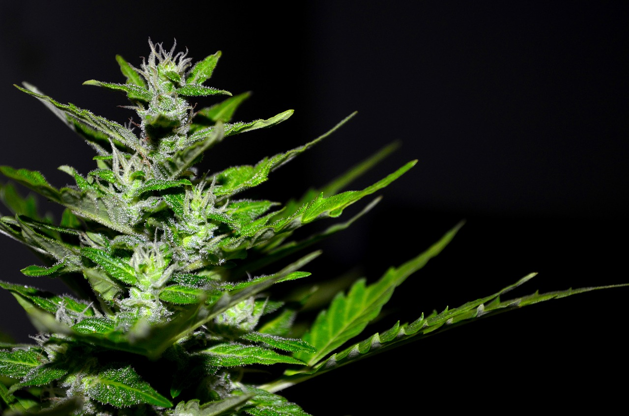 How Cannabis Can Help Stressed Business Managers