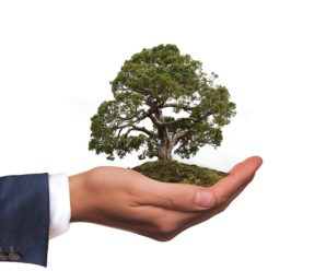 Eco Warrior VS Moderate Green – Types of Sustainable Investors in 2020